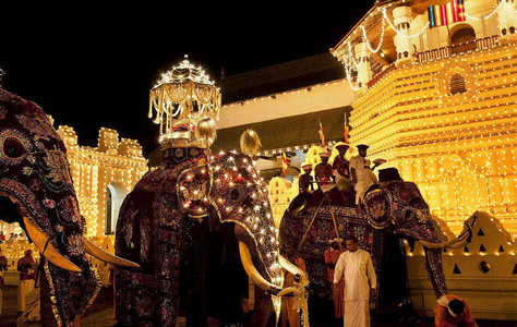 Dressed Elephants in kandy