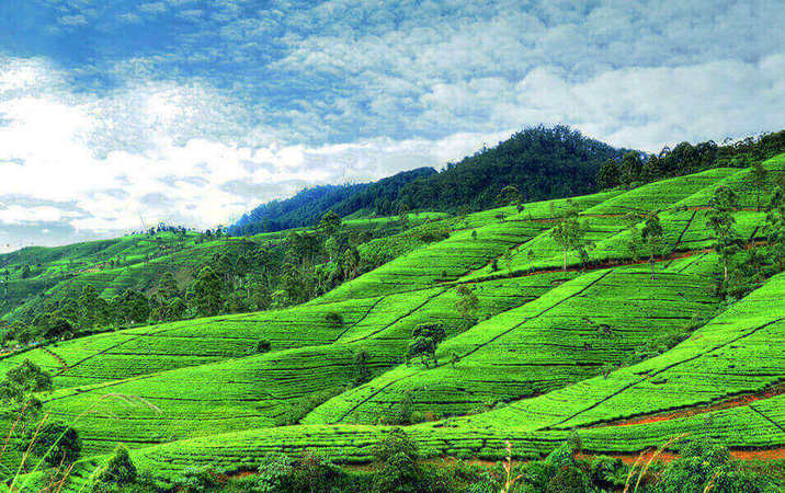 Nuwara eliya mountains