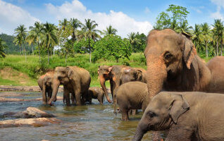 Elephans - mark tours sri lanka
